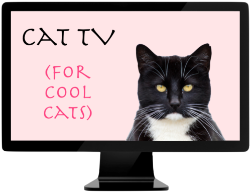 Cat TV for cool cats